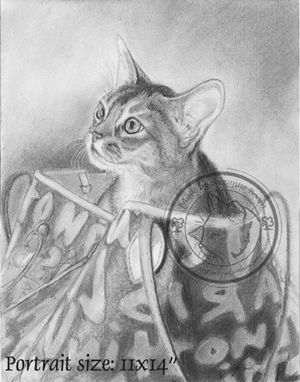 charcoal abyssinian cat portrait by Suzanne Boom