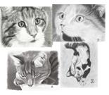 set of 4 cat cards