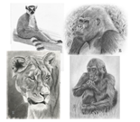 Wildlife Collection 2
