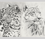 2 leopards charcoal portrait