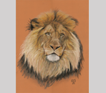 pastel Portrait of a Lion