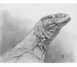 Komodo Dragon Portrait
