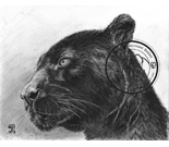 panther charcoal portrait