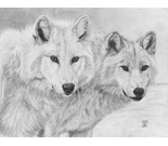 Wolf Brothers Portrait